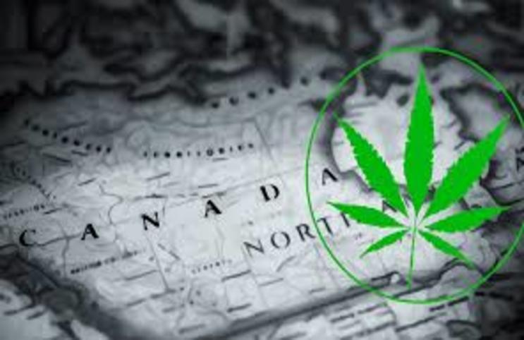 Cannabis_Stocks_743x482